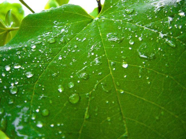 summer_leaf
